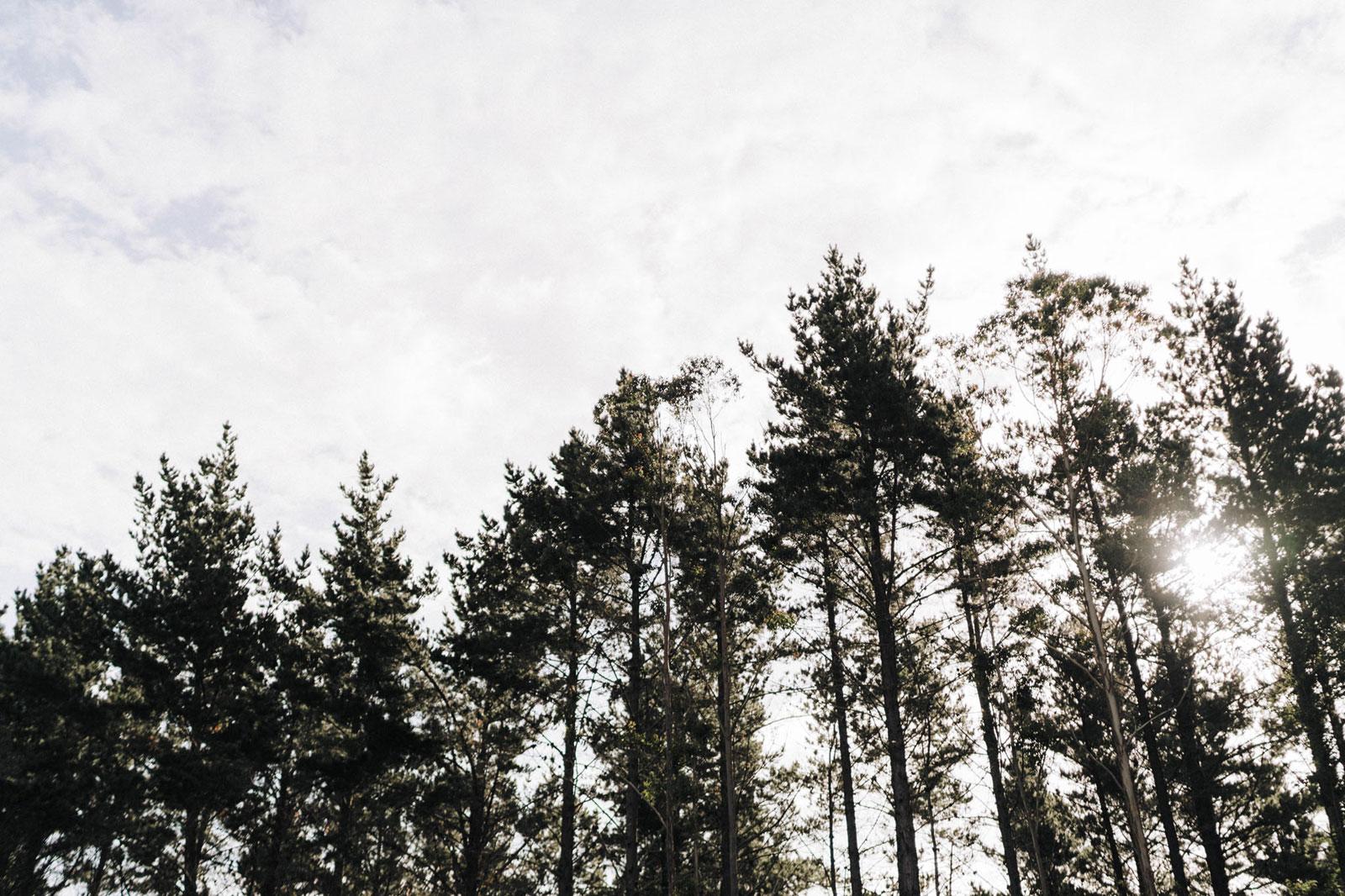 newfound-n-c-olive-tree-cottage-tauranga-wedding-photographer-914
